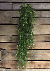 "ITEM 11231 - 34"" BOXWOOD HANGING VINE BUSH"