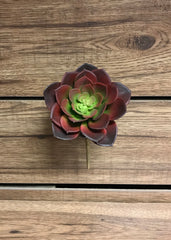 "ITEM 11243 - 7"" ECHEVERIA SUCCULENT PICK"