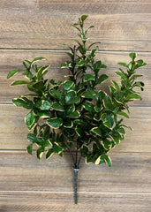 "ITEM 11333 - 14"" GOLDEN EUONYMUS BUSH"