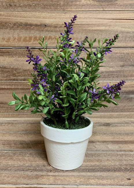 "ITEM 11368 PUR - 9"" PURPLE SWEET VERONICA BUSH POTTED"