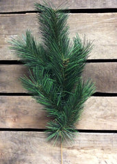 "ITEM 80833 - 1DZ PKG--20.5"" EASTERN WHITE PINE SPRAY"