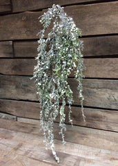 "ITEM 80994 CM -  45"" FROSTED CEDAR AND CREAM BERRIES HANGING SPRAY"