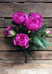 "ITEM 10135 MV - 22.5"" MAUVE PEONY BUSH WITH 9 HEADS"