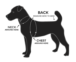 image of dog profile with notations on where to measure