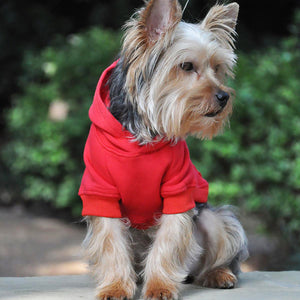 image of dog wearing hoodie