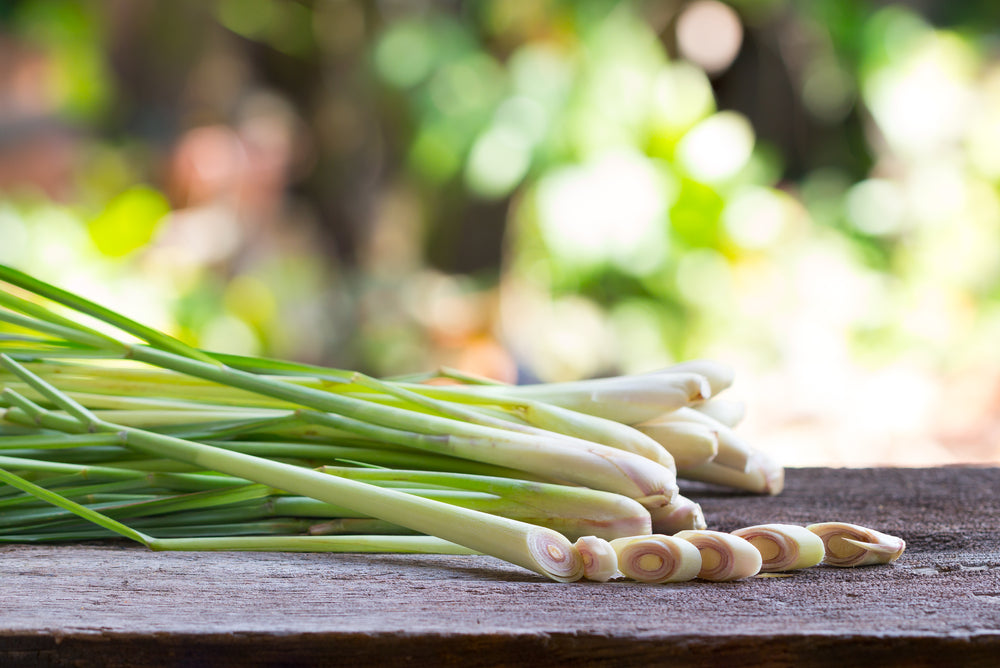 lemongrass essential oil comes from the Cymbopogon citratus plant