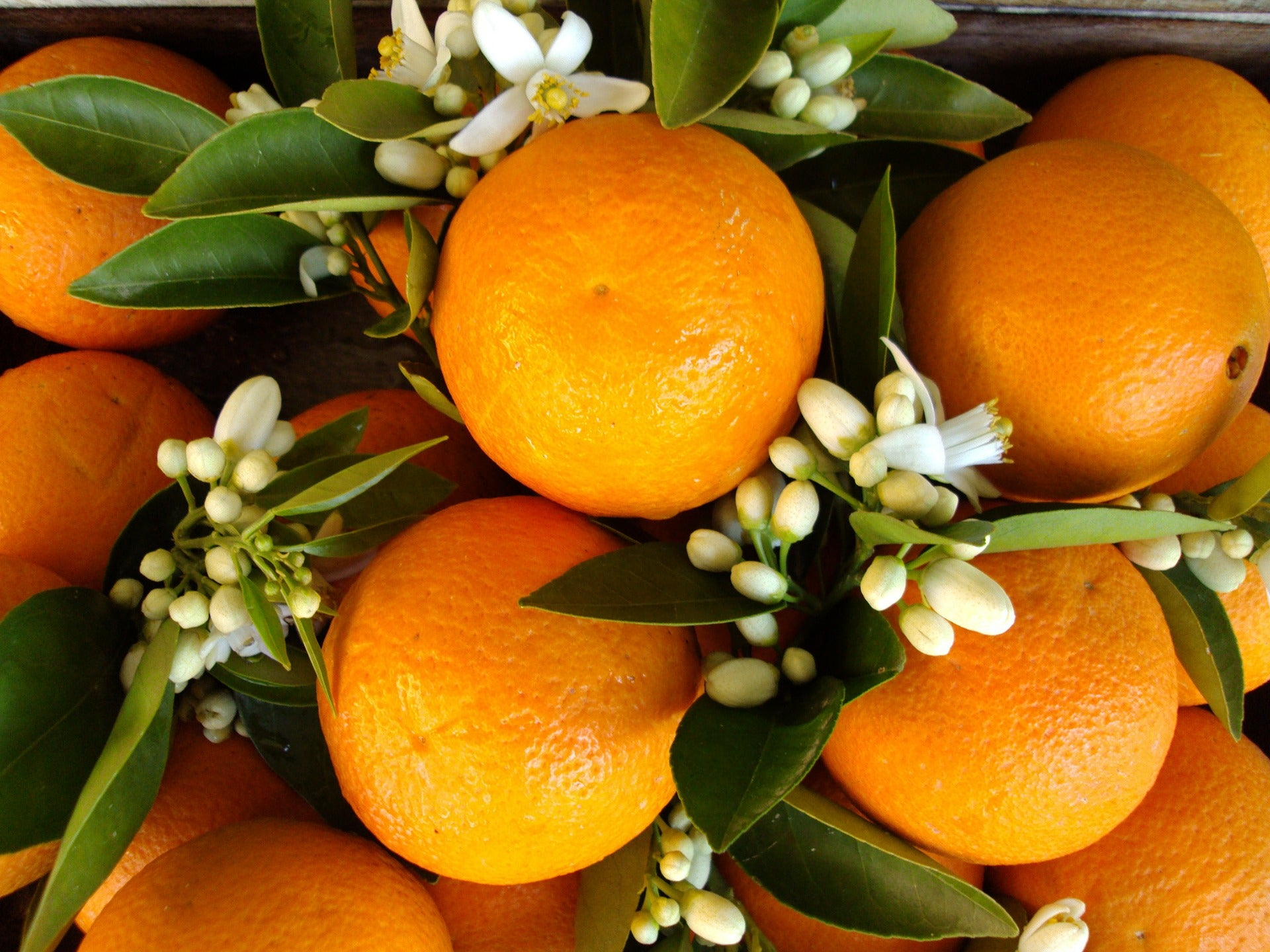Neroli essential oil comes from the fruit of the tree