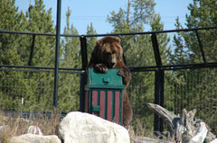 Bear Proof Trash Receptacle