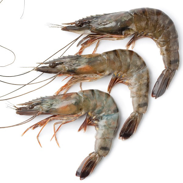 Black Tiger shrimp 26/30 340g