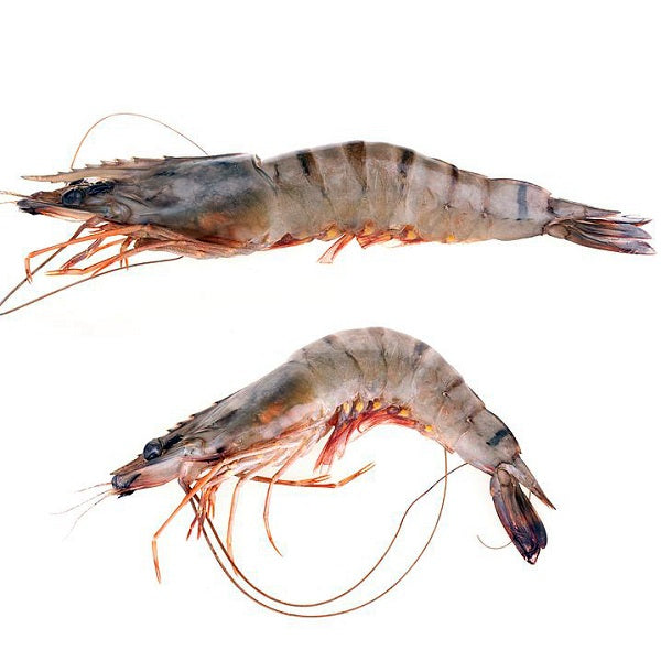 Kasturi Premium Black Tiger Shrimp 26/30  1.54kg