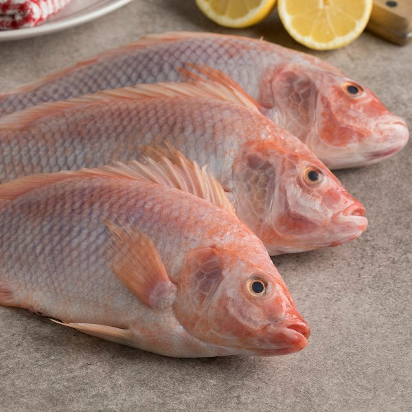 Red Tilapia Frozen