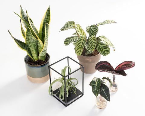 Urban Resort | Premium Planten Box