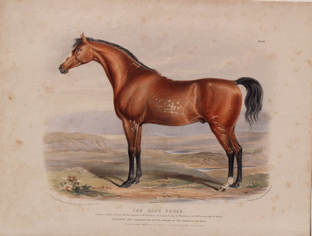 The Race Horse