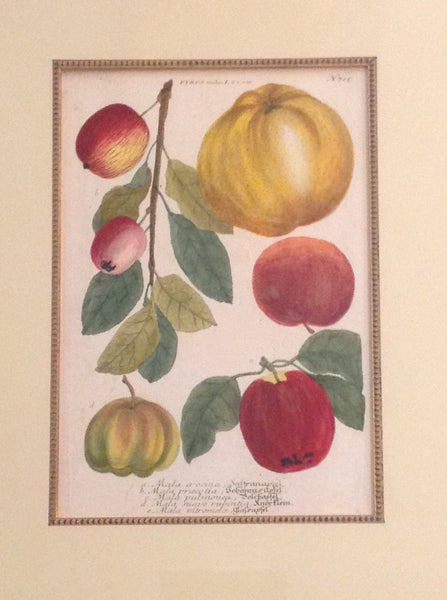 Apples (Pair of two)