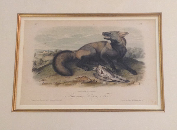 American Cross Fox, Tawny Weasel, Large Tailed Spermephile, and Pine Martin (Set of four)