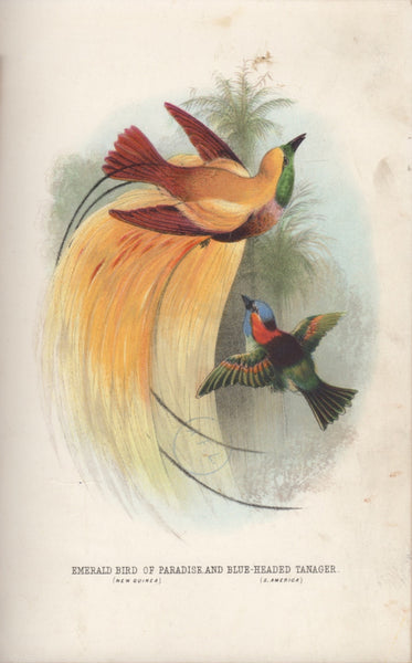 Emerald Bird of Paradise (New Guinea) and Blue Headed Tanager (S.America)