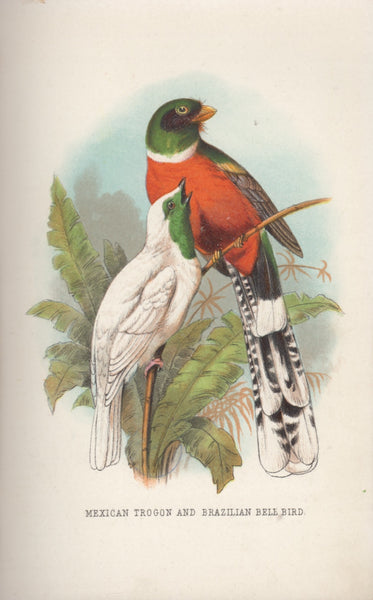 Mexican Trogon And Brazilian Bell Bird