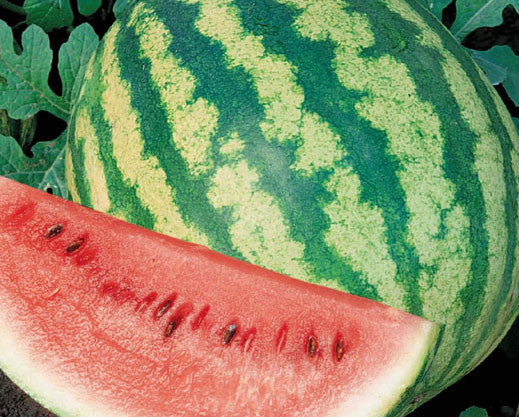 Crimson Sweet Watermelon - Bulk Vegetable Seeds - 50 grams
