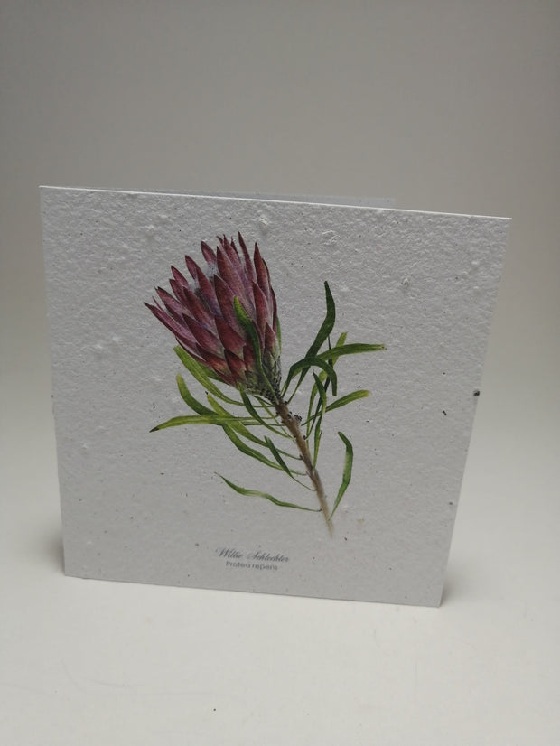 Growing Paper - Greeting Card - King Protea