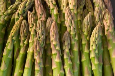 Mary Washington Asparagus - Bulk Vegetable Seeds - 20 grams