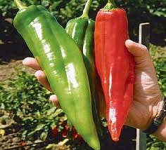 Numex Big Jim Chilli Pepper - Capsicum Frutescens - 10 Seeds