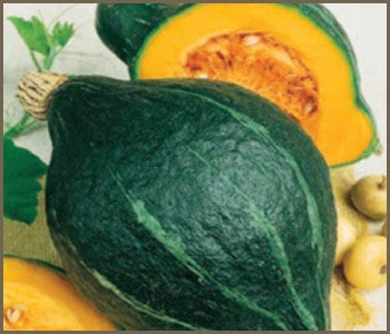 Chicago Warted / Green Hubbard Squash - Cucurbita Maxima - 5 Seeds