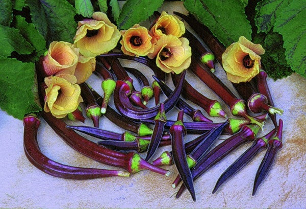 Red Burgundy Okra - Abelmoscgus Esculentus - Vegetable - 30 Seeds
