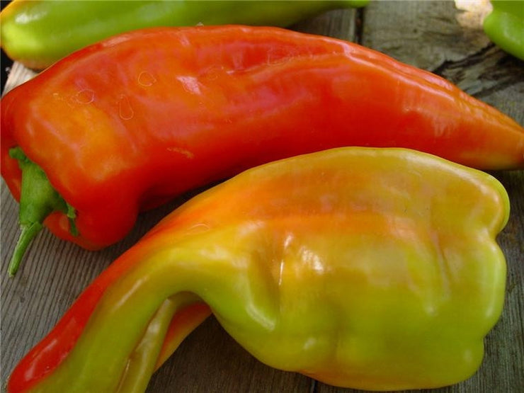 Giant Aconcagua Sweet Pepper - Capsicum Annuum - 5 Seeds