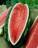 All Sweet Watermelon - ORGANIC - Citrullus Lanatus - Fruit - 15 Seeds