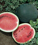 Sugar Baby Watermelon - ORGANIC - Citrullus Lanatus - Vegetable / Fruit - 20 Seeds