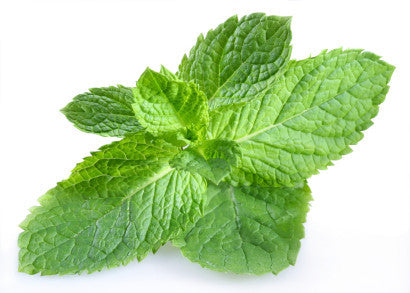Peppermint - Mentha x piperita - Culinary Edible Herb - 50 Seeds