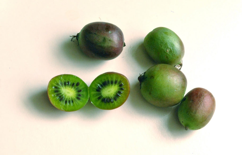 Actinidia arguta - Kiwi berry - Kiwi Fruit variety - Exotic Shrub - 5 Seeds