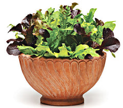 Alfresco Salad Leaf Mix - Vegetable - 5 Seed Pellets - Simply Salad - Multi Seed Pellets - The Patio Vegetable Collection