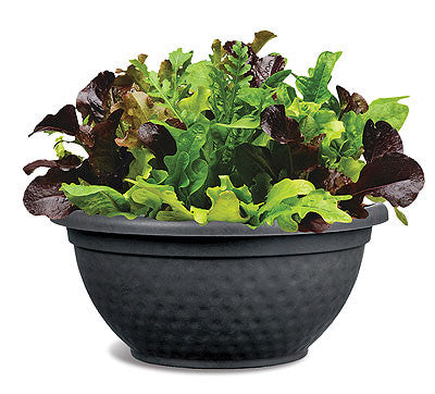 City Garden Salad Leaf Mix - Vegetable - 5 Seed Pellets - Simply Salad - Multi Seed Pellets - The Patio Vegetable Collection