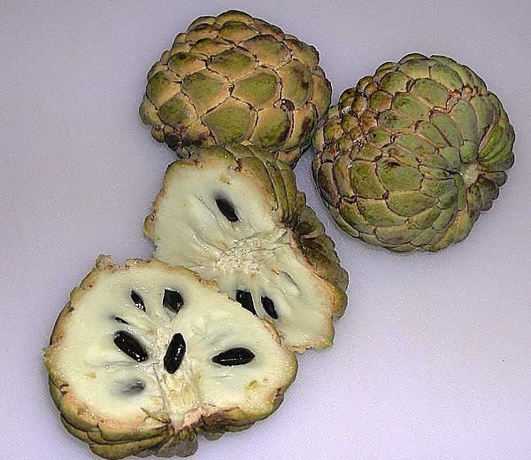 Annona Squamosa - Sugar Apple - Exotic Edible Fruit - 5 Seeds