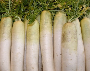 Snow White Carrot - Heirloom Vegetable - 100 Seeds