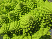 Romanesco Broccoli - Fractal Head Cauliflower - Brassica Oleracea - Exotic Vegetable - 100 Seeds