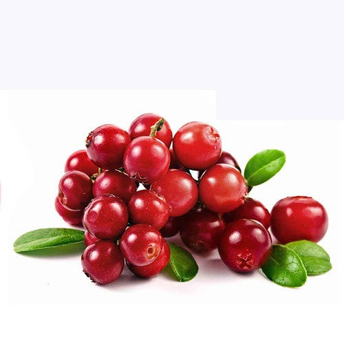 American Cranberry - Vaccinium Macrocarpon - 10 Seeds - Fruit Tree - Exotic Fruit