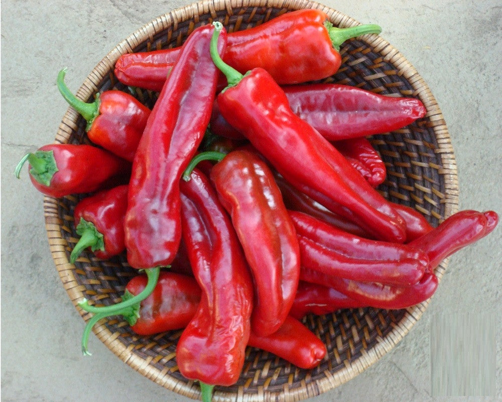 Giant Ristra Chilli Pepper - F1 Hybrid - Capsicum annuum - 5 Seeds
