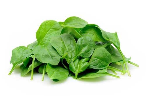 Cornet Baby Leaf Spinach - Hybrid - Spinacea Oleracea - 100 Seeds