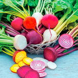 Rainbow Mix Beetroot - Beta Vulgaris - Heirloom Beet Blend - 25 Seeds
