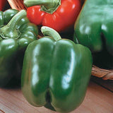 King Arthur Bell Pepper - Massive Sweet Peppers - Capsicum Annuum - 5 Seeds
