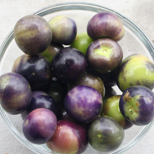 Purple Tomatillo- Physalis Ixocarpa - 25 Seeds