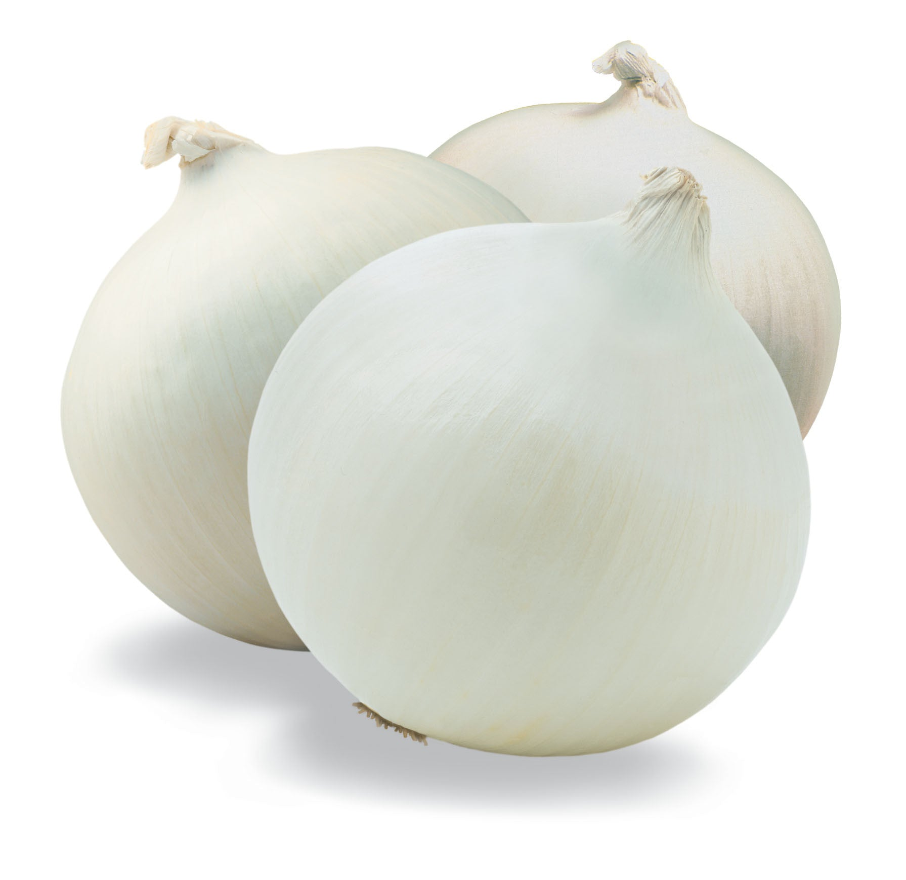 Crystal White Wax Pickling Onion - Heirloom Vegetable - 50 Seeds