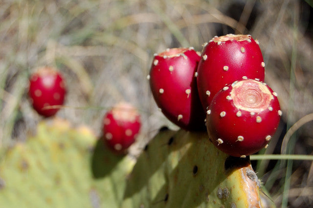 Prickly Pear - Opuntia ssp Mixed - Edible Fruit - Succulent Cactus Fruit - 5 Seeds