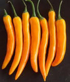 Bulgarian Carrot Chilli Pepper - Capsicum Annuum - Chilli pepper - 10 Seeds