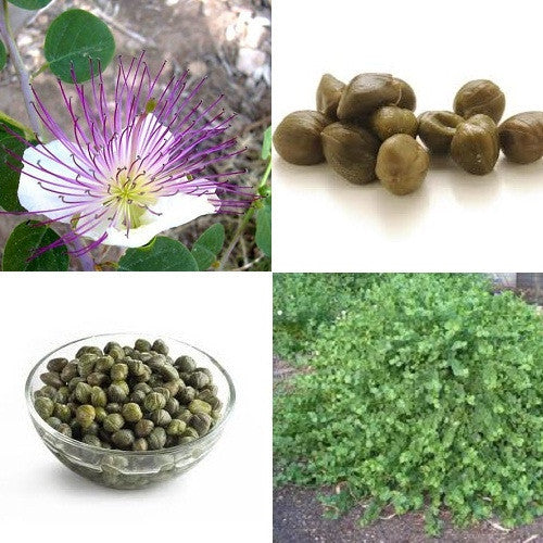 Caper Bush, Caper Berry - Capparis Spinosa - 5 Seeds