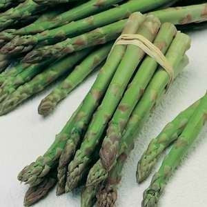 UC157 Hybrid Asparagus - Asparagus Officinalis - Vegetable - 40 Seeds