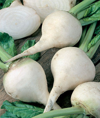 White Albino Beetroot - Bulk Vegetable Seeds - 20 grams