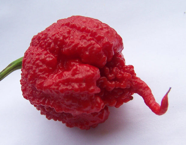 Carolina Reaper Pepper - Capsicum Chinense - The worlds HOTTEST Chilli Pepper - Seeds